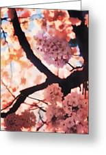 Cherry Blossoms In Washington D.c. Greeting Card