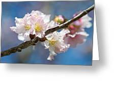 Cherry Blossoms On Blue Greeting Card