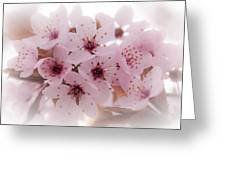 Cherry Blossoms Greeting Card by Rod Sterling