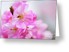 Cherry Blossoms Sweet Pink Greeting Card