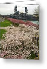 Cherry Blossoms Trees Along Portland Waterfront Greeting Card