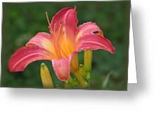 Cherry Cheeks Daylily Greeting Card