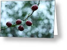 Cherry Constellation  Greeting Card