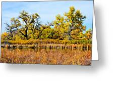 Cherry Creek Pond In Autumn Greeting Card