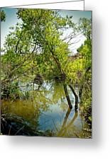 Cherry Creek Trail Study 3 Greeting Card