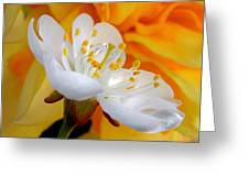 Cherry Flower In The Spring, In Profile Greeting Card