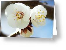 Apricot Flowers II Greeting Card