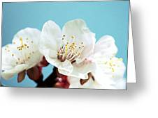 Apricot Flowers IIi Greeting Card