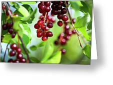 Cherry Jubilee Greeting Card