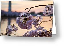 Cherry Pedals Greeting Card