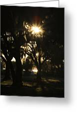 Cherry Point Trees Greeting Card