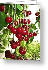Cherry Time Greeting Card