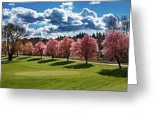 Cherry Tree Bloom Color Greeting Card
