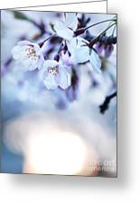 Cherry Tree Blossoms In Morning Sunlight Greeting Card