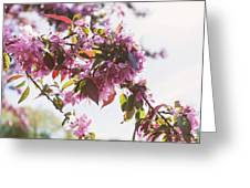 Cherry Tree Flowers Greeting Card