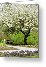 Cherry Tree In Full Bloom Greeting Card