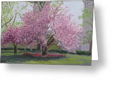 Cherry Tree Madison Square Park Greeting Card