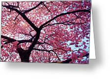 Cherry Tree Greeting Card