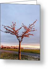 Cherry Tree Standing Alone In A Park, Lit By The Light  Greeting Card