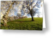 Cherry Trees In Bloom In Nashville Greeting Card
