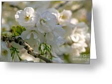 Cherryblossom Flowers 2 Greeting Card