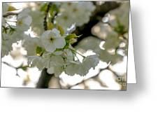 Cherryblossom Flowers 4 Greeting Card