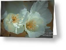 Cherryblossom Flowers Greeting Card