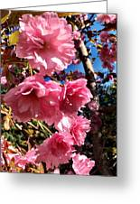 Cherryblossoms Perspective  Greeting Card