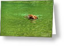 Chesapeake Bay Retriever Swimming Greeting Card