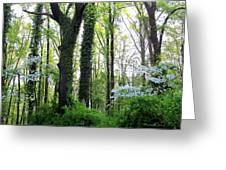 Chesapeake Oldgrowth Forest Greeting Card