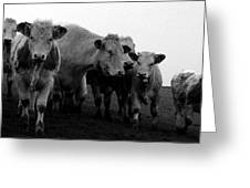 Cheshire Cattle Greeting Card
