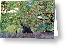 Chestnut Tree In Autumn Greeting Card