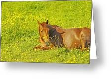 Chess Nut Horse Greeting Card
