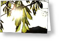 Chestnut Greeting Card