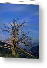 Centenary Chestnut At Blue Hour Greeting Card
