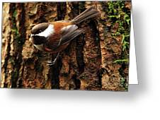 Chestnut-backed Chickadee On Tree Trunk Greeting Card