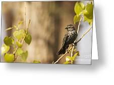 Chestnut-sided Warbler Greeting Card