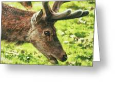 Chewing The Cud Greeting Card