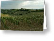 Chianti Vineyards In Tuscany Greeting Card