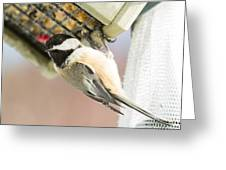 Chicadee At Suet Greeting Card