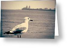 Chicago Seagull Greeting Card