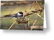 Chickadee-11 Greeting Card by Robert Pearson