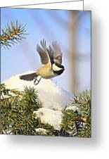 Chickadee-13 Greeting Card