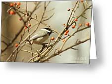 Chickadee 2 Of 2 Greeting Card
