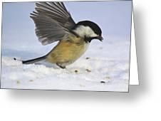 Chickadee-2 Greeting Card