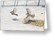 Chickadee-6 Greeting Card by Robert Pearson