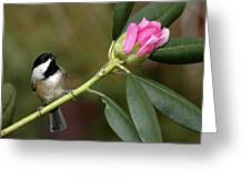 Chickadee By Rhododendron Bud Greeting Card