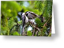 Chickadee Feeding Time Greeting Card