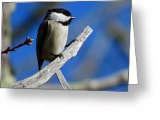 Chickadee Moments Greeting Card