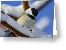 Chickadee... Greeting Card